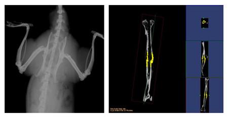 可以对不脱钙骨骼和动物牙齿进行microct检测   服务,分析其内部结构